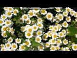 «Цветы» под музыку Поль Мариа.  - Мама - невероятно красивая мелодия. Picrolla
